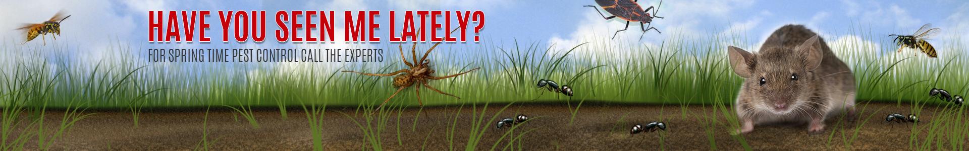 Pest Control, Exterminator, Madison WI | Kwik Kill Pest Control